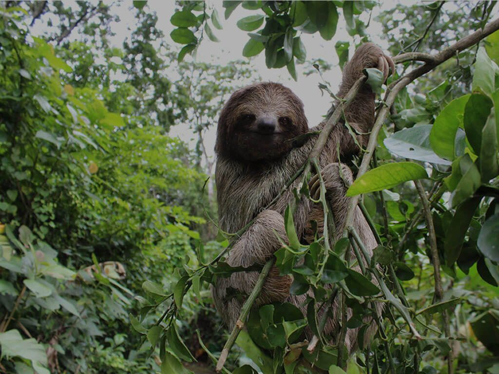 Sloths and rainforest with Costa Rica Unique Transfers and Tours